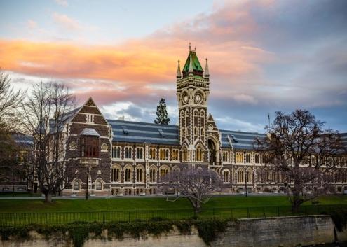 کارشناسی در نیوزلند